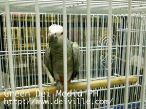 Cartimar Pet ShopFlora and Fauna Section