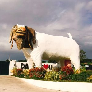 best things to do in cagayan Cagayan Breeding Station