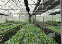 lakad pamana agri-tourism farm in bulacan