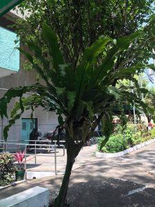 Birds Nest Fern_Best Indoor Plants For Your Home