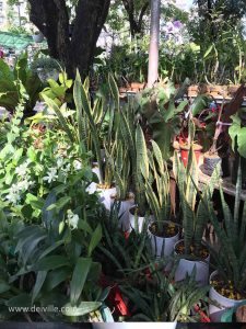 Snake Plant_Best Indoor Plants For Your Home