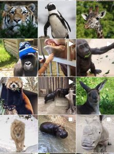 toronto zoo_top 3 tourist spots in toronto
