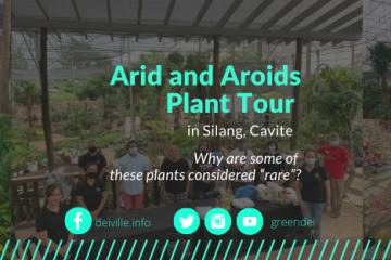 Arid and Aroids 1M Rare Plant and Premium Plants - Arid and Aroids Plant Tour