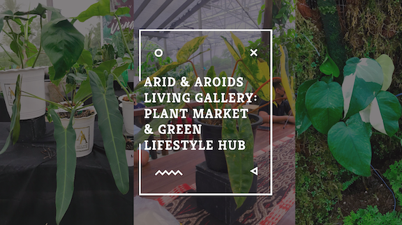 Best things to do in Arid and Aroids Living Gallery
