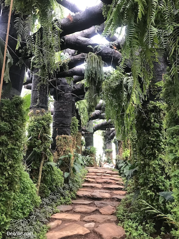 Best things to do in Arid and Aroids Living Gallery_mossy forest_01