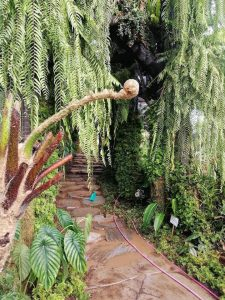 Dinosaur Fern Arid and Aroids 1M Rare Plant and Premium Plants