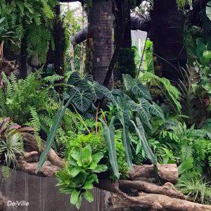 Philodendron Spiritus Sancti Arid and Aroids 1M Rare Plant and Premium Plants_01