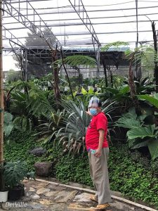 Rence Chan_Arid and Aroids Living Gallery Plant Tour